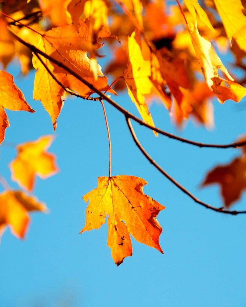 5 Fall Fun Activities for the Family